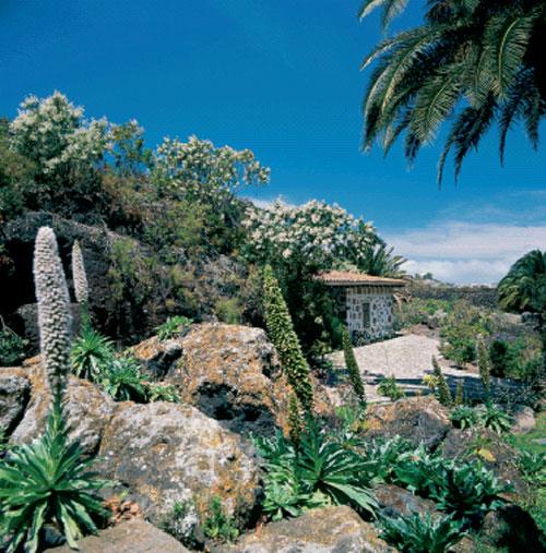 Rincones del atl ntico for El jardin canario