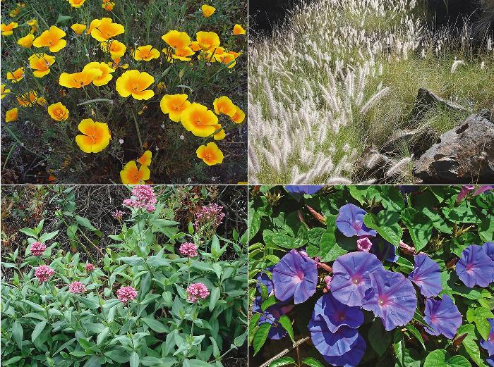 Plantas ornamentales invasoras